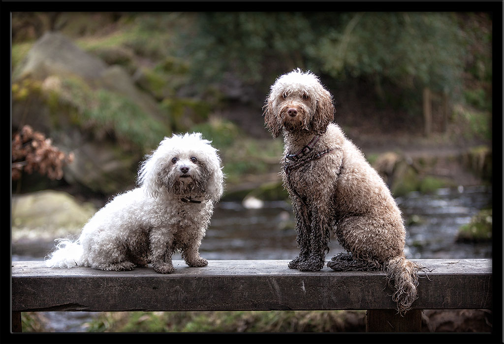 Pet Photography Halifax Photograph of the Week